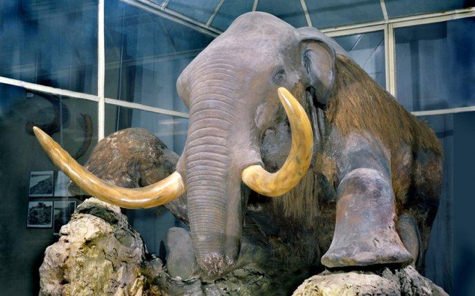 Зоологический Музей - МАМОНТЫ И МАМОНТОВАЯ ФАУНА